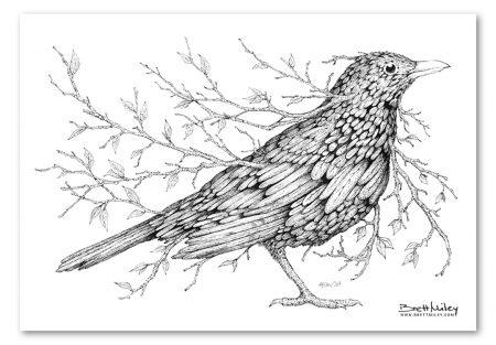 Leaf Blackbird Print - Brett Miley Art