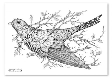 Leaf Cuckoo Print - Brett Miley Art