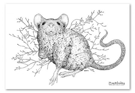 Leaf Mouse Print - Brett Miley Art