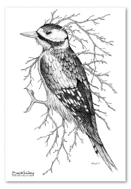 Leaf Woodpecker Print - Brett Miley Art