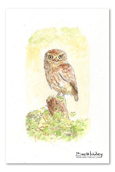 Little Owl Watercolour Art by Brett Miley