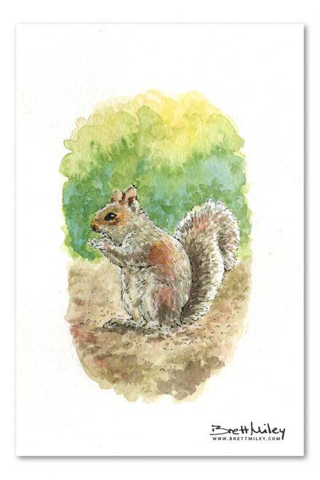 Grey Squirrel Watercolour Art by Brett Miley
