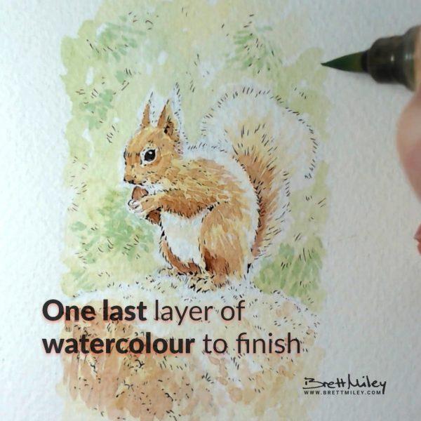 Red Squirrel Watercolour Art by Brett Miley