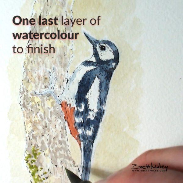 Woodpecker Daily Watercolour Art by Brett Miley