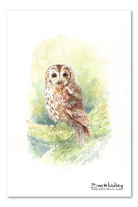 Tawny Owl Watercolour Art by Brett Miley
