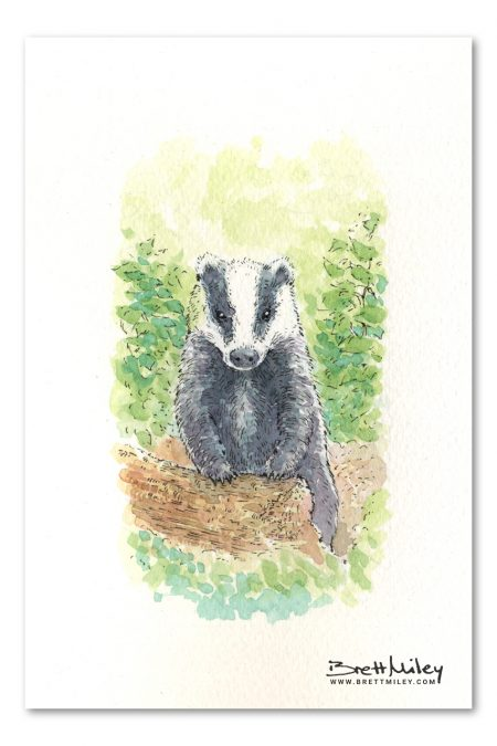 Badger Watercolour Art by Brett Miley