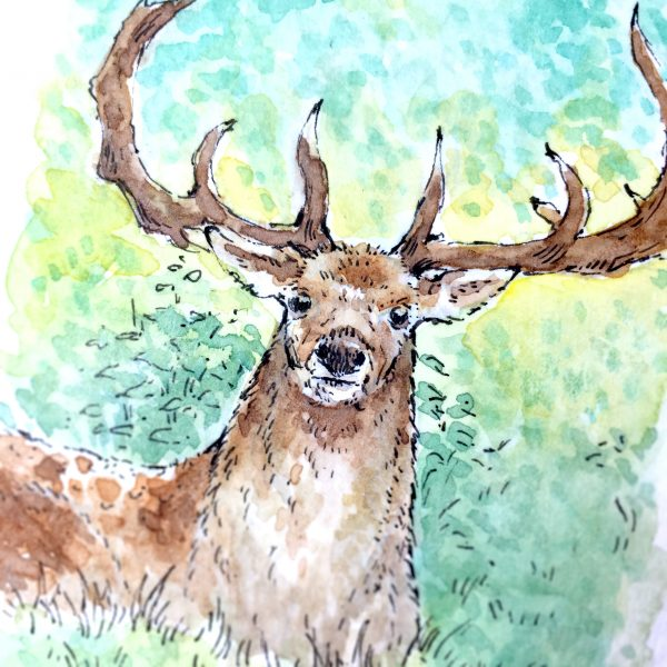 Stag Daily Watercolour Art by Brett Miley