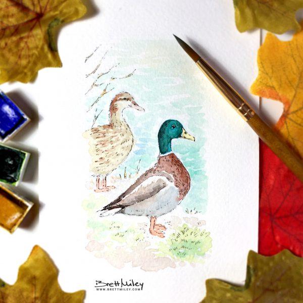 Mallard Ducks Watercolour Art by Brett Miley