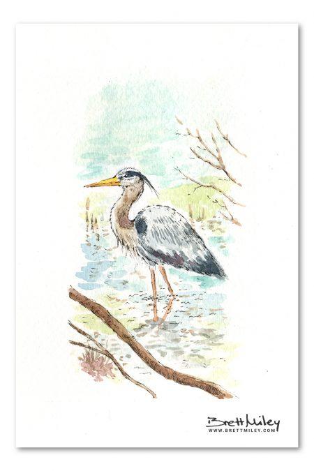 Heron Watercolour Art by Brett Miley
