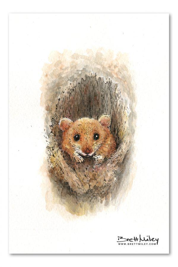 Mouse Watercolour Art by Brett Miley