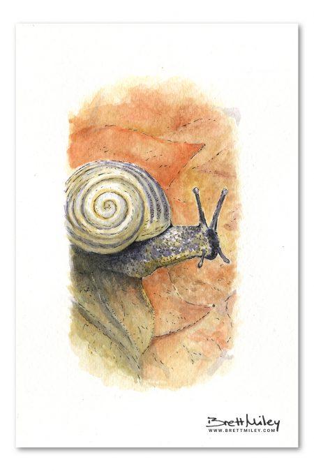 Snail Watercolour Art by Brett Miley