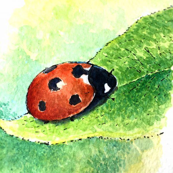 Ladybird Watercolour Art by Brett Miley
