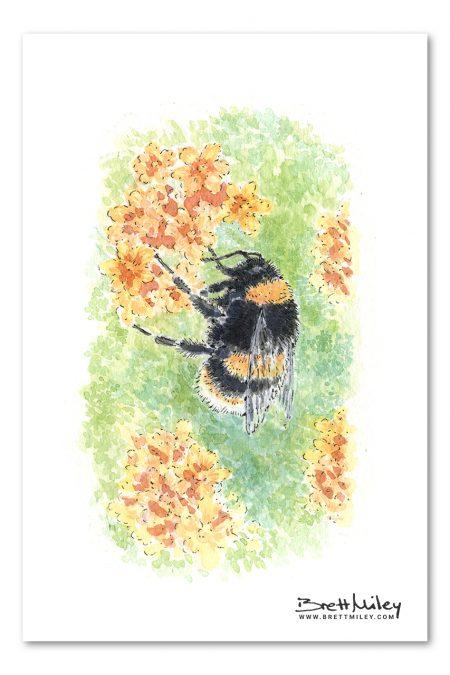 Bumble Bee Watercolour Art by Brett Miley