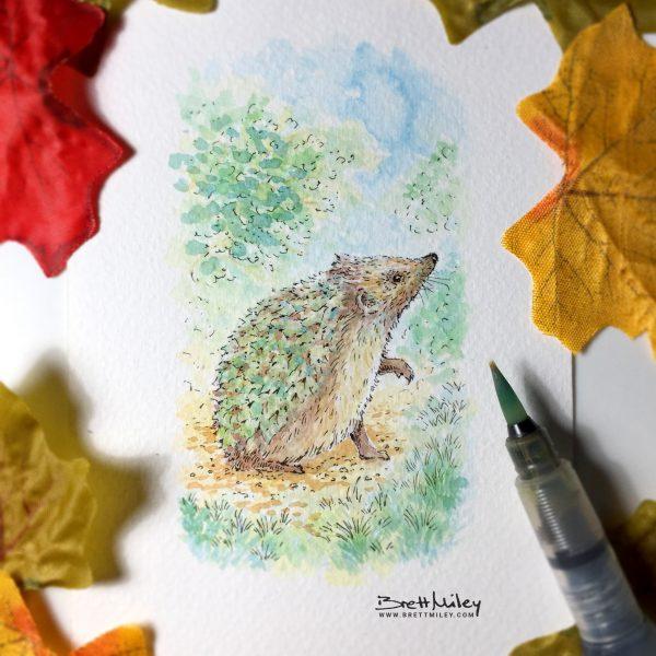 Hedgehog Watercolour Art by Brett Miley
