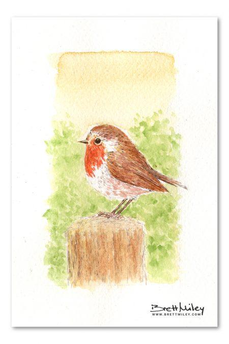 Robin Watercolour Art by Brett Miley