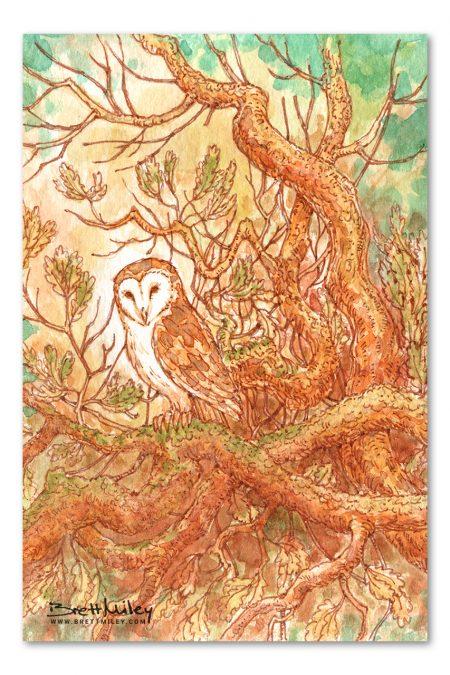Barn Owl Watercolour Art by Brett Miley