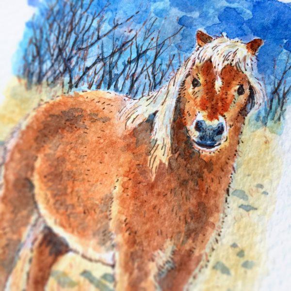 Pony Watercolour Art by Brett Miley