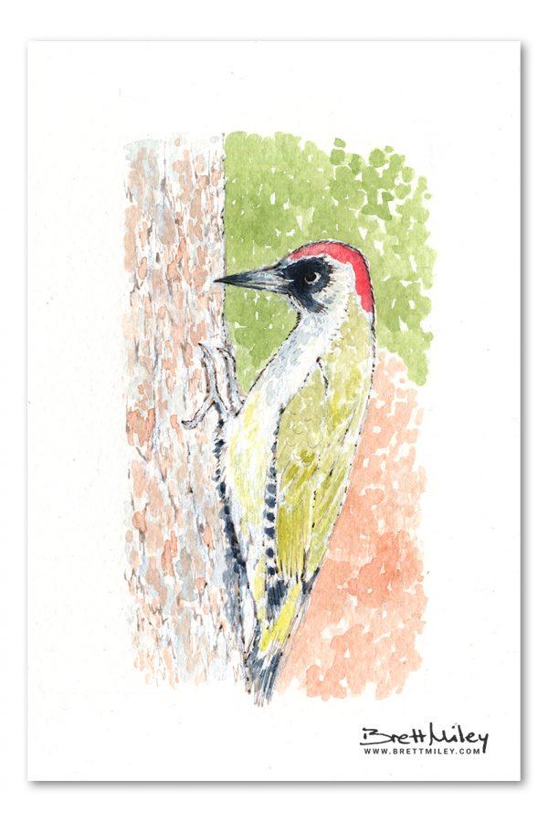 Green Woodpecker Watercolour Art by Brett Miley
