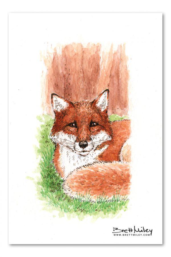 Fox Watercolour Art by Brett Miley